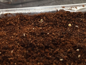 Signs of germination